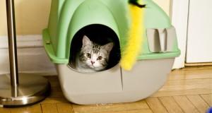 Cane Bay Summerville Cat in Litter Box