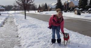 Cane Bay Summerville - Dog Walking