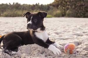 Cane Bay Summerville - Pet Sitting