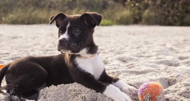Cane Bay Summerville - Pet Sitting