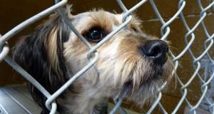 Cane Bay Summerville - Dog Shelter