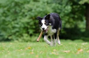 Cane Bay Summerville - Dog With Bone