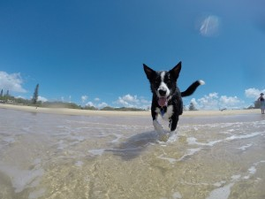 Cane Bay Summerville - Dog in Summer