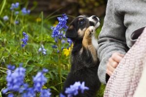 Cane Bay Summerville - Dog Greeting