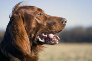Cane Bay Summerville - Dog