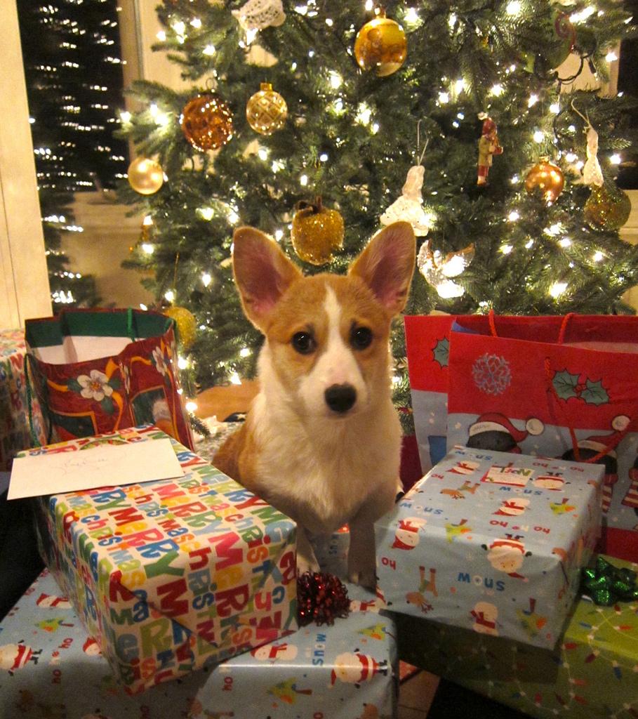 Make DIY Christmas Gifts for Your Pet