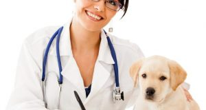 Cane Bay Summerville - Dog with Vet