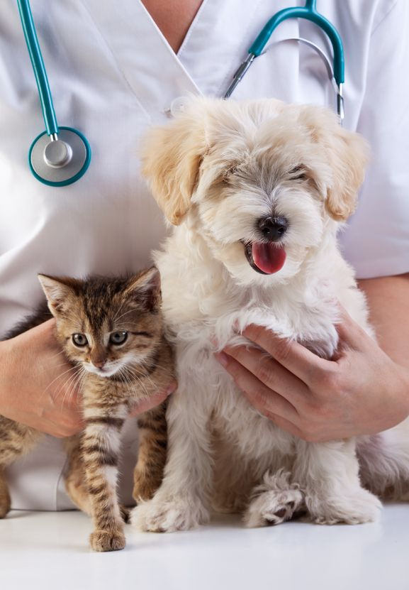 Cane Bay Summerville - Vaccinating Your Pet