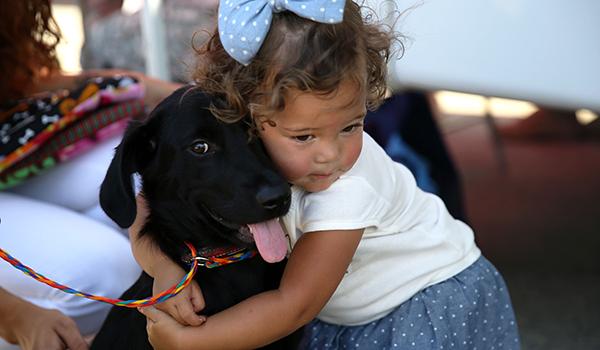Cane Bay Summerville - Choosing right dog breed