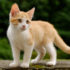 Cane Bay Summerville - Control Your Cat's Shedding