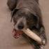 Doggy Dental Chews
