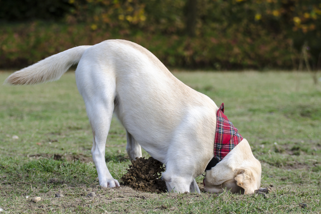 Cane Bay Summerville - Dog's Digging