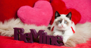 Cane Bay Summerville - Cat on Valentine's Day