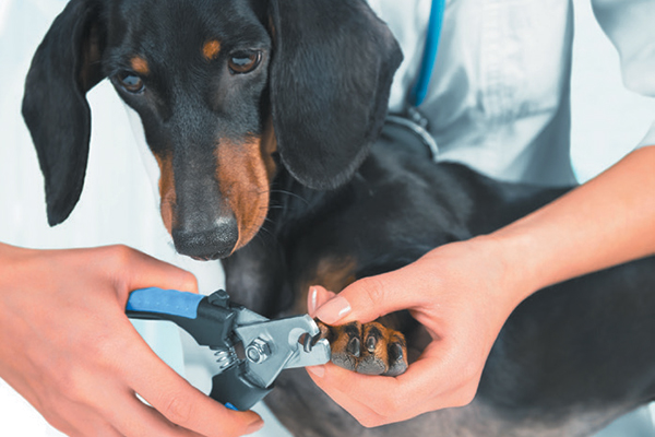 Cane Bay Summerville - Clip your dog's nails