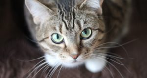 Cane Bay Summerville - Declawing Your Cat