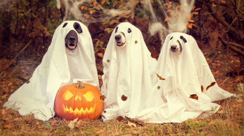 Cane Bay Summerville - Halloween Treats for Your Pet