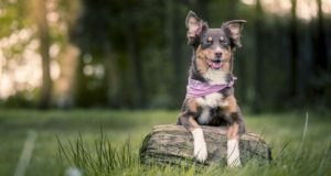 Cane Bay Summerville - Pet Sitter