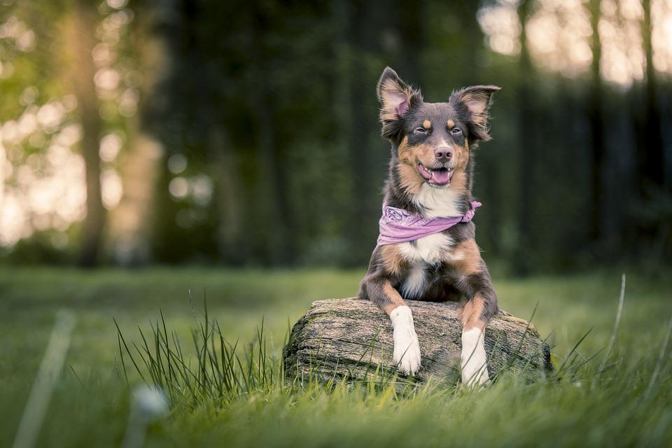 Cane Bay Summerville - Pet Sitter