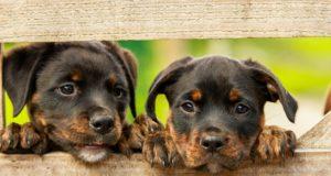 Cane Bay Summerville - animal welfare charities