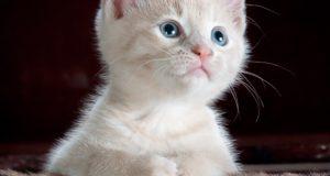 Cane Bay Summerville - Cat Litter Tracking