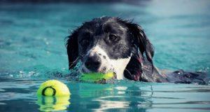 Cane Bay Summerville - Shave Your Dog
