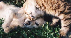 Cane Bay Summerville - animal shelters
