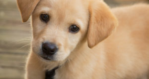 Cane Bay Summerville - puppy training classes