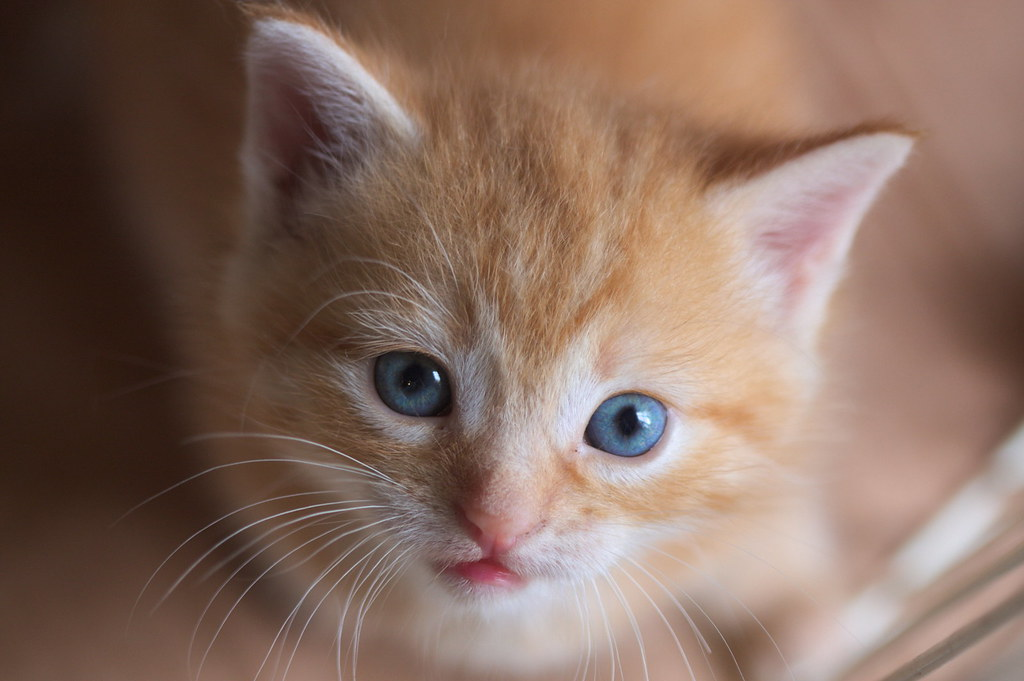 Cane Bay Summerville - Feline Lower Urinary Tract Disease