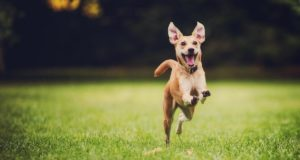 Cane Bay Summerville - does your dog get the zoomies