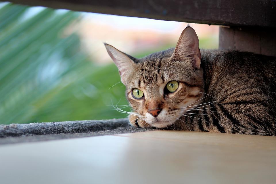 Cane Bay Summerville - Destructive Cat Scratching