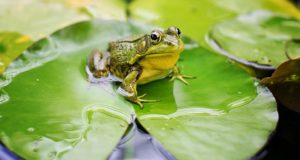 Cane Bay Summerville - exotic pets frogs