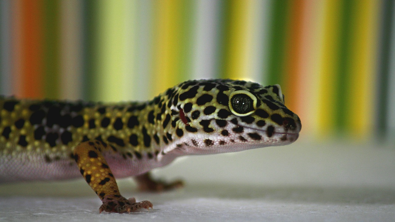 Cane Bay Summerville - exotic pets reptiles