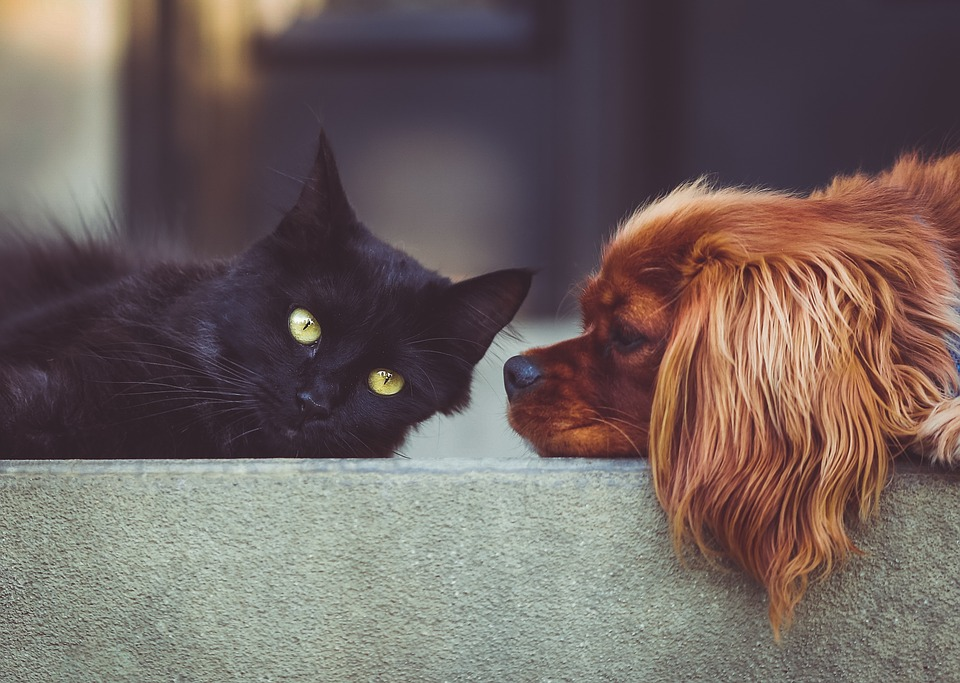 Cane Bay Summerville - Are Essential Oils Safe for Pets?