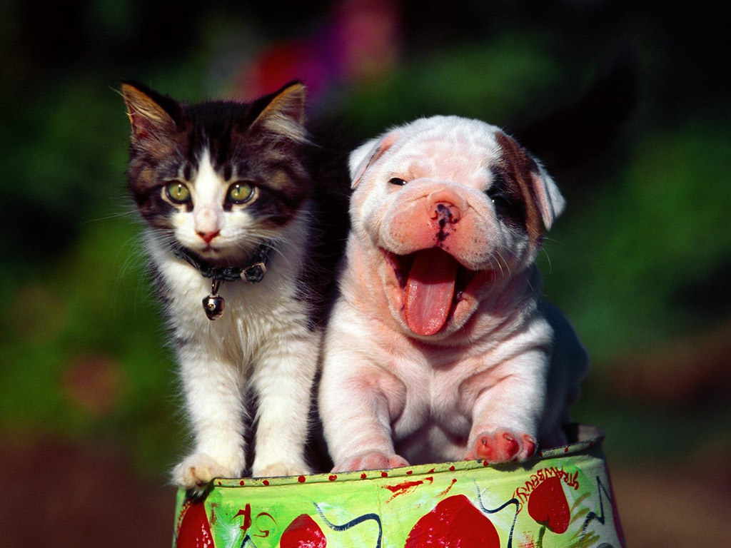 Cane Bay Summerville Acupuncture for Pets - Is It a Viable Option?