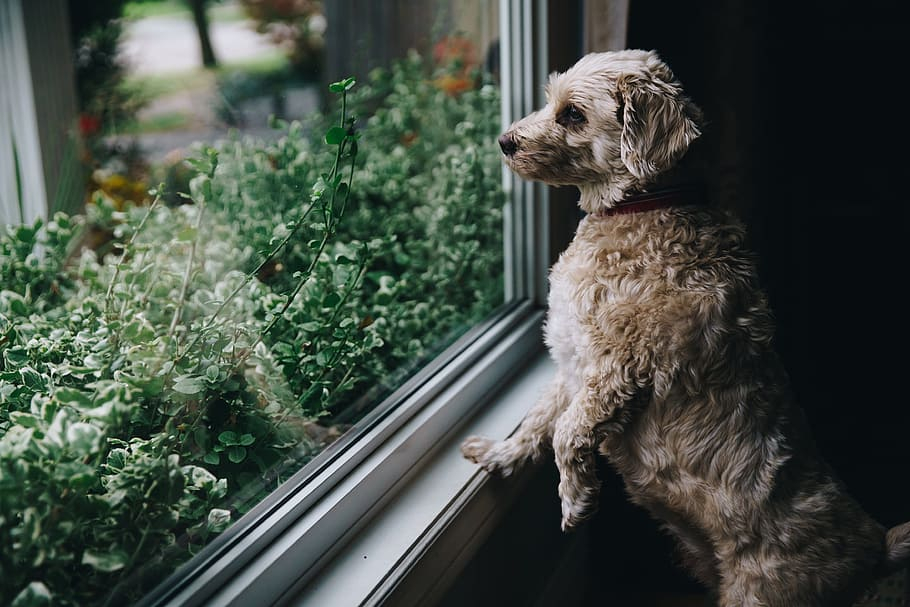 Cane Bay Summerville - How To Keep Your Dog Active During a COVID-19 Quarantine