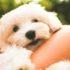 Cane Bay Summerville - Benefits of Adopting a Pet During Quarantine