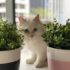 Cane Bay Summerville - 10 Common Houseplants That Are Toxic to Pets