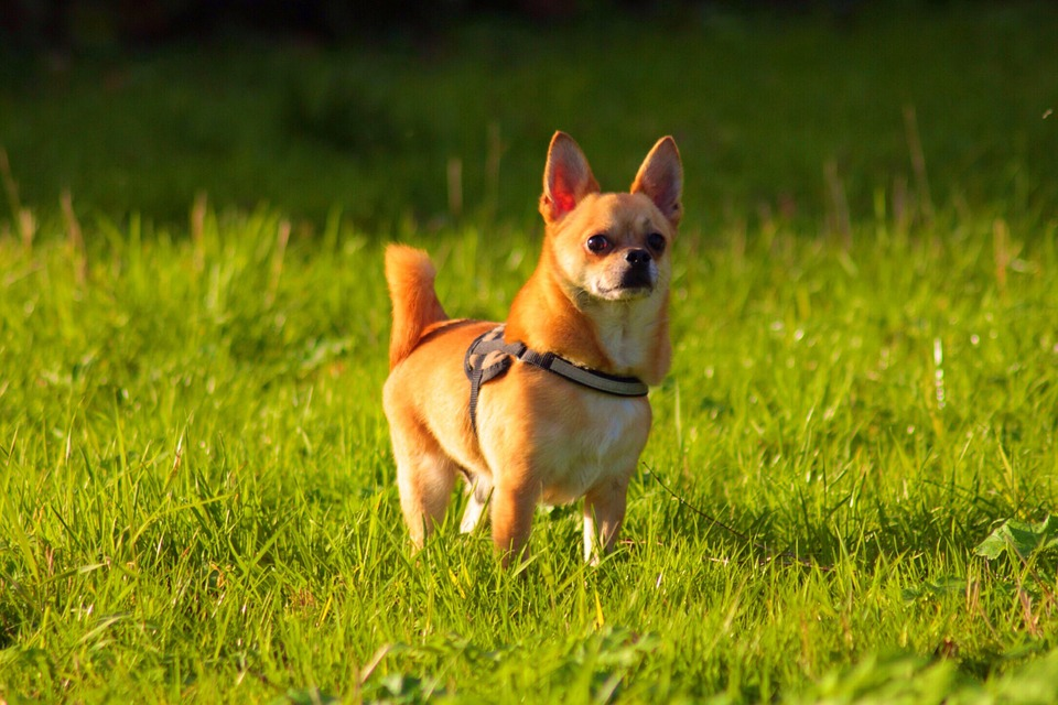 Cane Bay Summerville - How To Prevent Dog Urine From Killing Your Grass