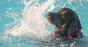 Cane Bay Summerville - Can Dogs Swim in Pools with Chlorine?