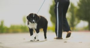 Cane Bay Summerville - Let Your Dog Sniff on Walks