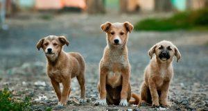 Cane Bay Summerville - Shelters Rescue Pets