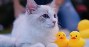 Cane Bay Summerville - Do Cats Need Baths