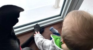 Cane Bay Summerville - Best Pets for Children