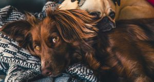 Mother's Day Gifts for Pet Moms