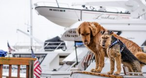 Cane Bay Summerville - Safety Tips for Taking Your Dog Boating