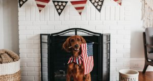 Cane Bay Summerville - 4th of July Sweet Treats for Your Pet