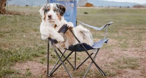 Cane Bay Summerville - Camping With Your Canine Companion