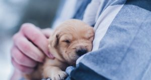 Cane Bay Summerville - Caring For Your Pregnant Dog