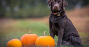 Cane Bay Summerville - halloween costumes for pets