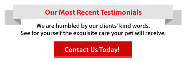 Reviews-and-Testimonials-header